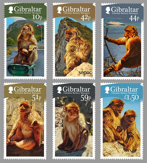 Gibraltar-Barbary-Macaques