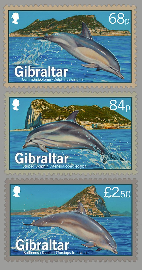 2014-Dolphins-of-Gibraltar