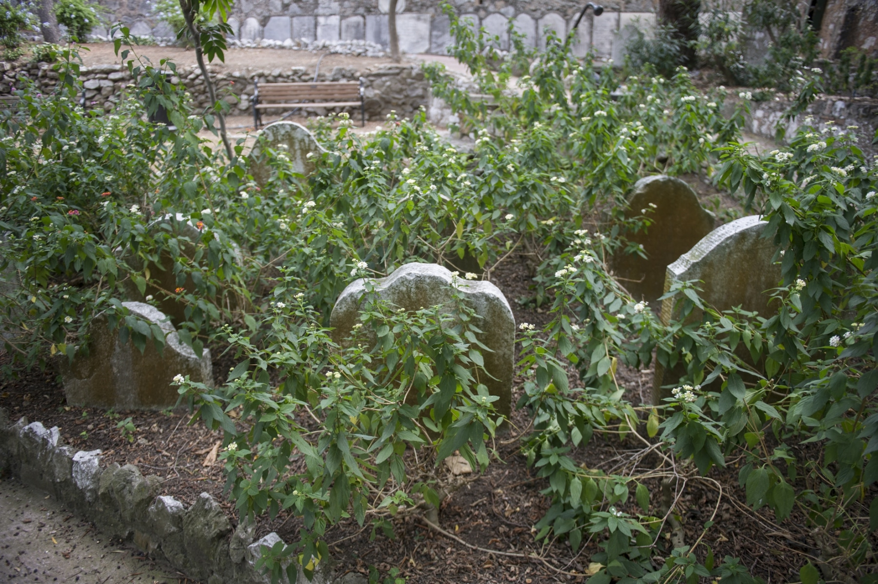 cementerio-de-trafalgar-gibraltar_22123438113_o