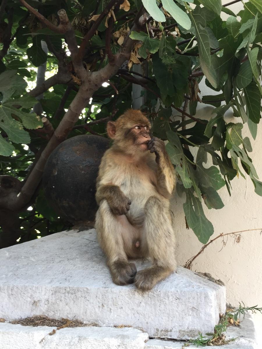 Monos-en-la-ciudad-1