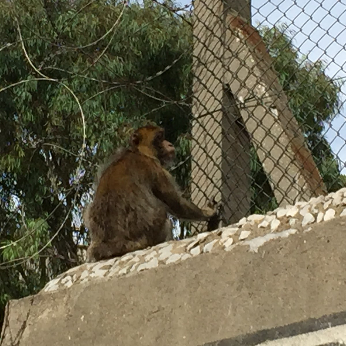 Monos-en-la-ciudad-12
