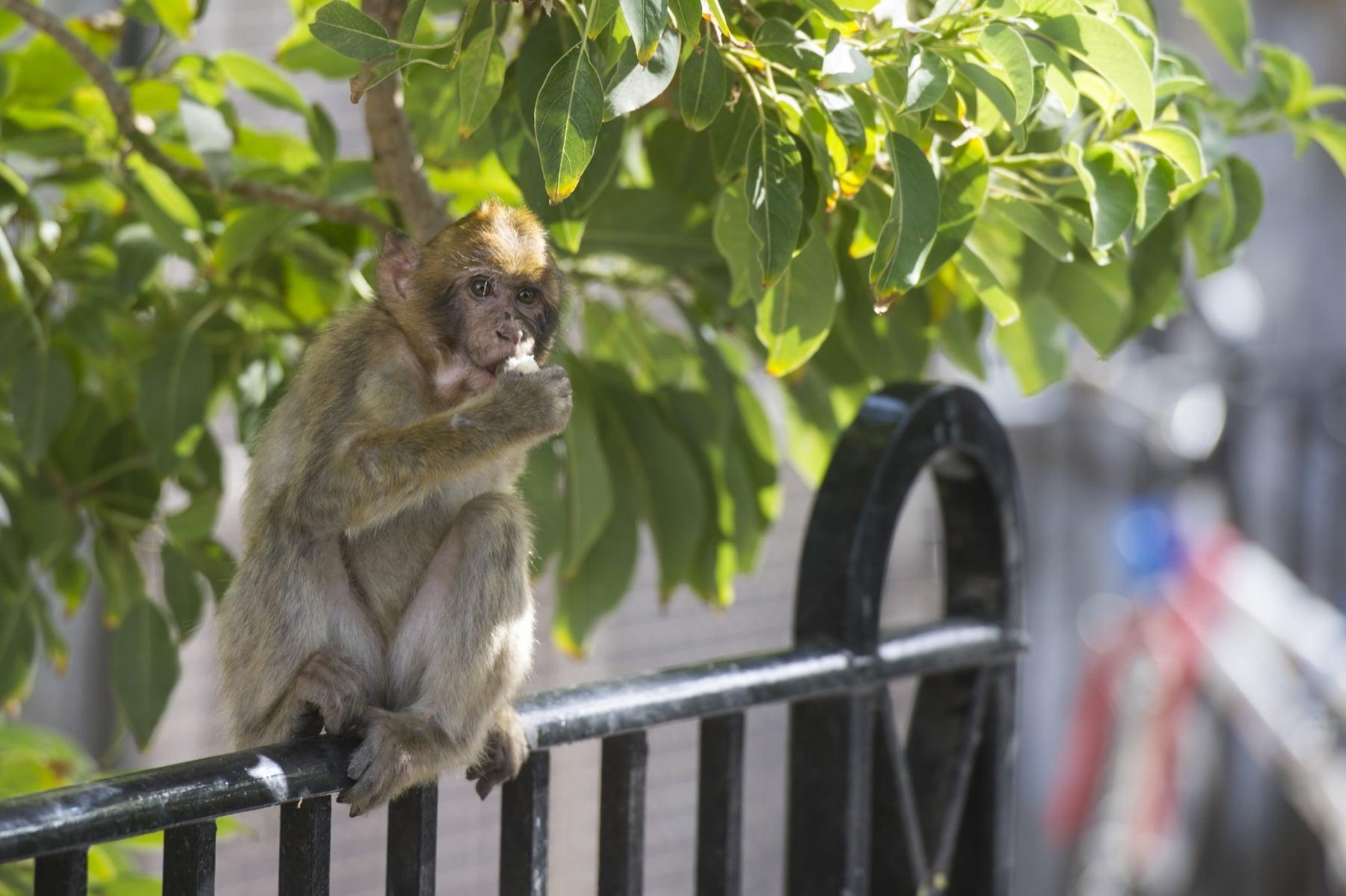 Monos-en-la-ciudad-15