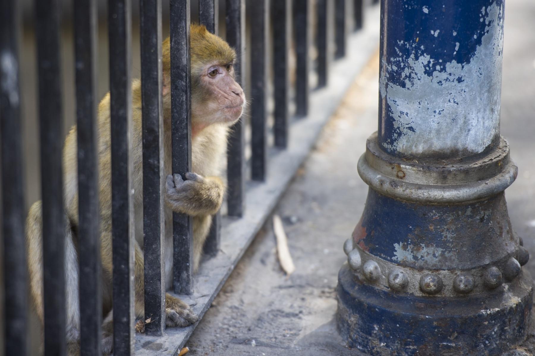 Monos-en-la-ciudad-16
