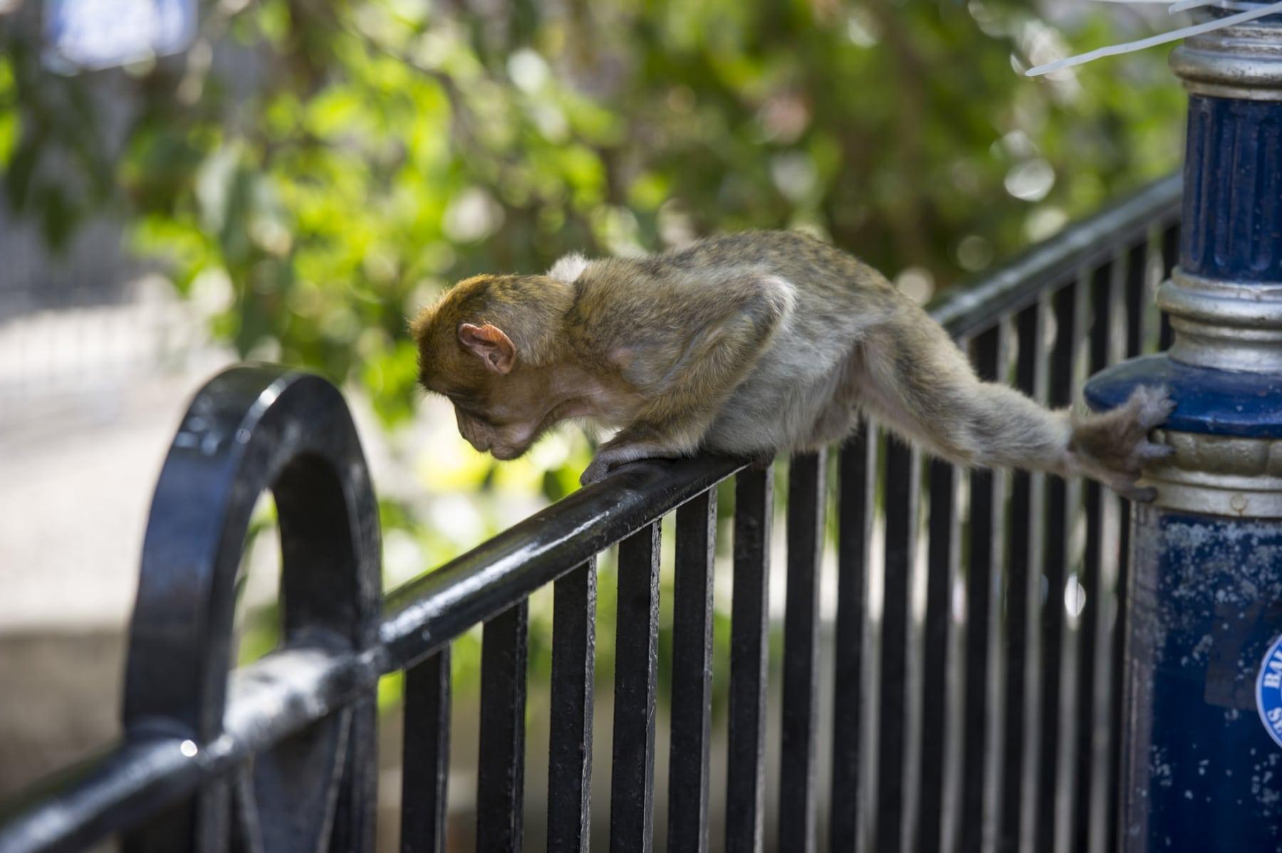 Monos-en-la-ciudad-17