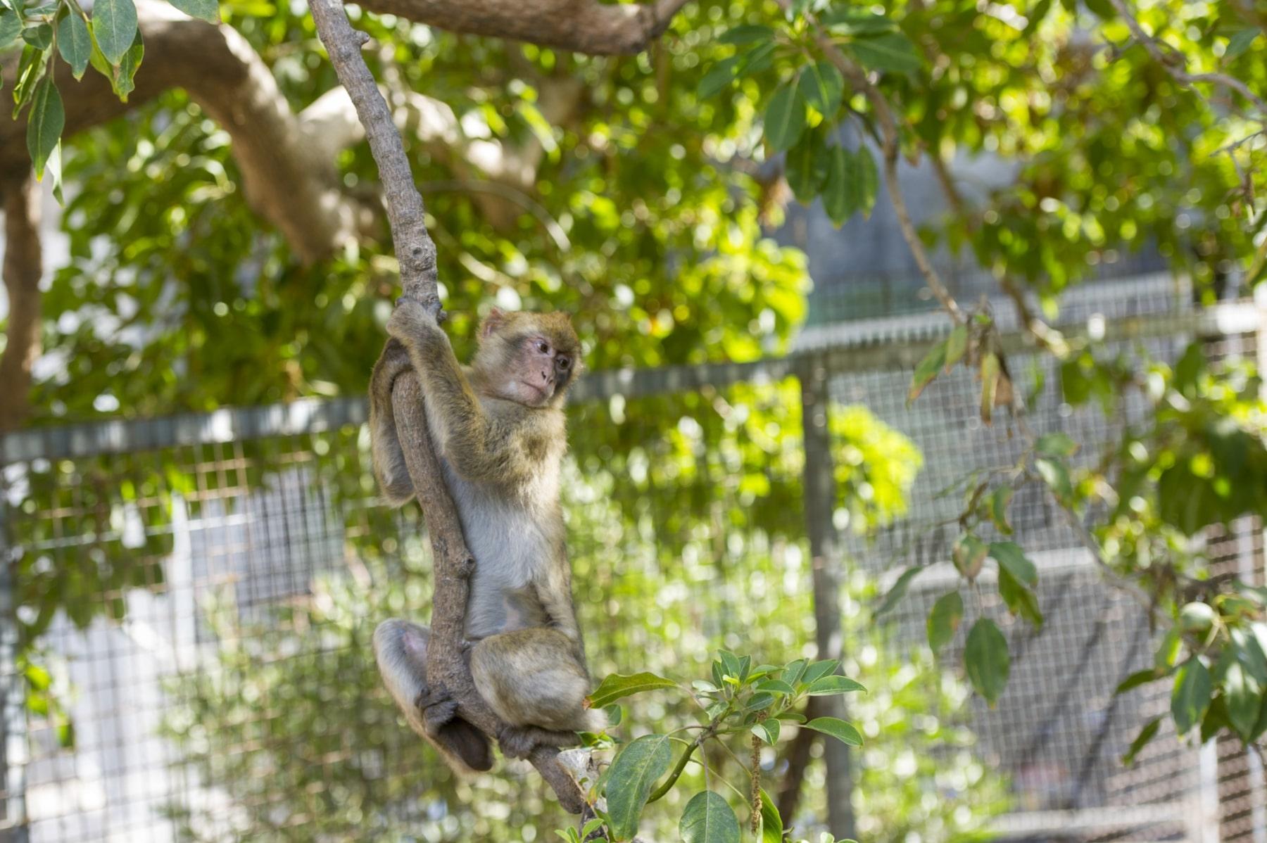 Monos-en-la-ciudad-18