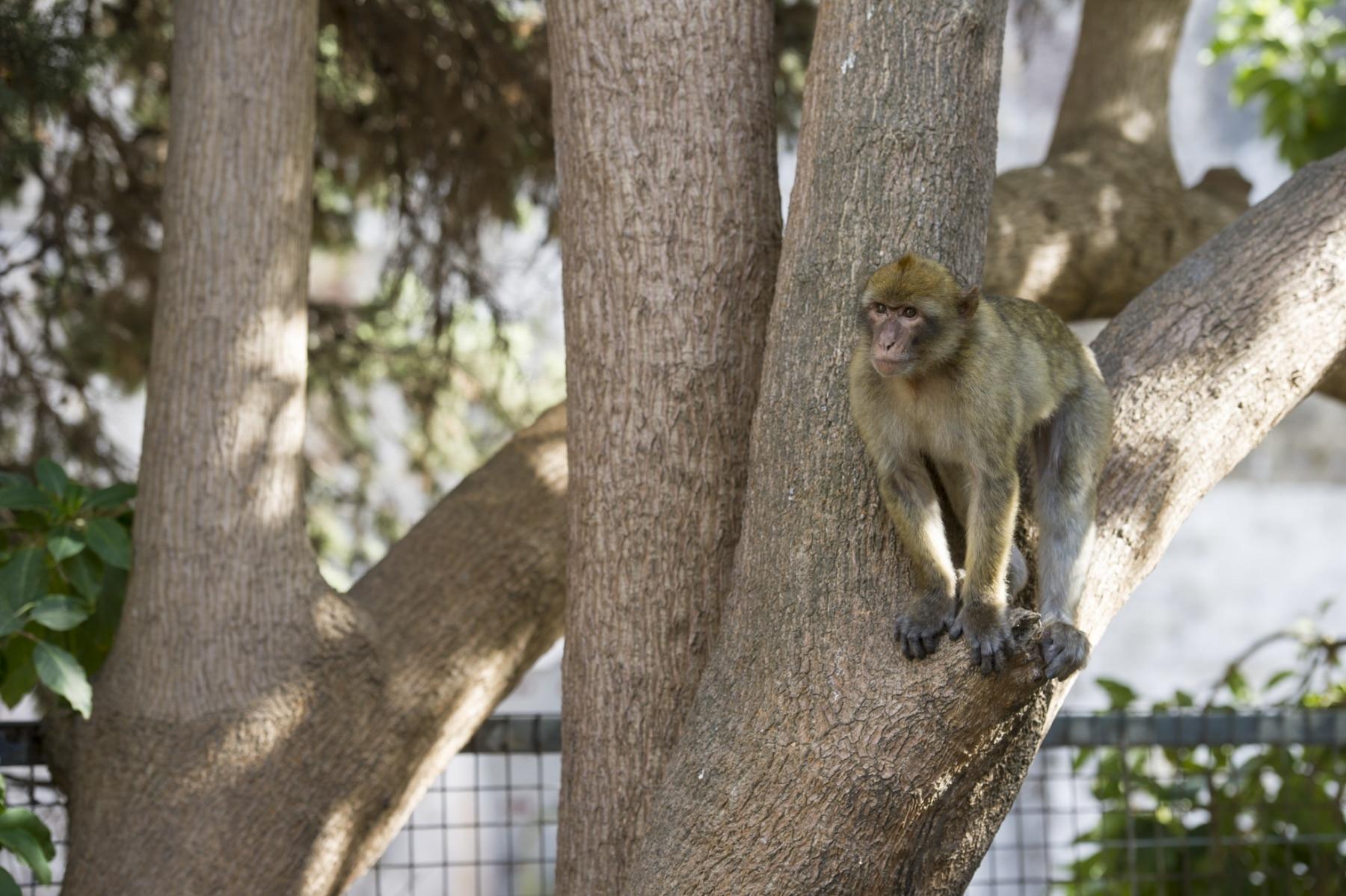 Monos-en-la-ciudad-19