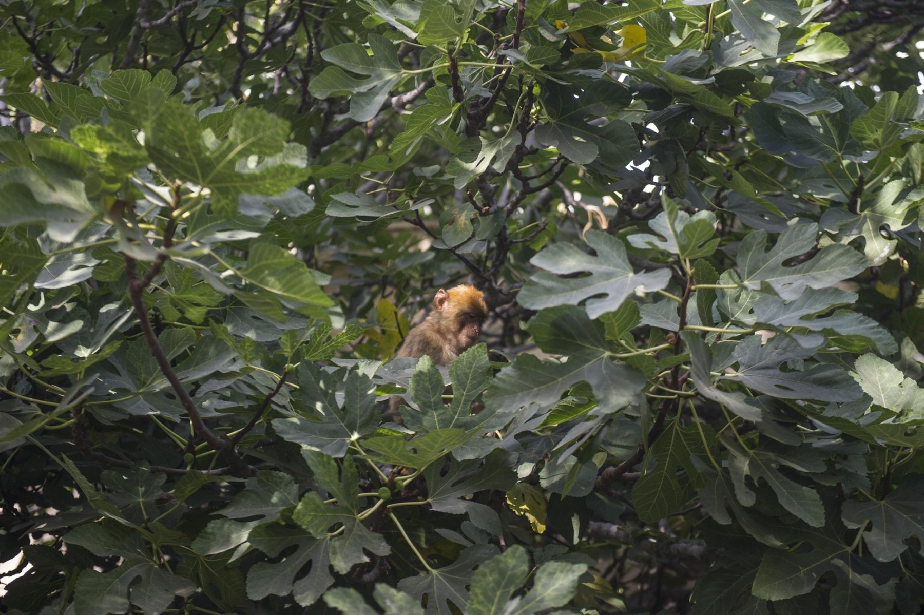 Monos-en-la-ciudad-2
