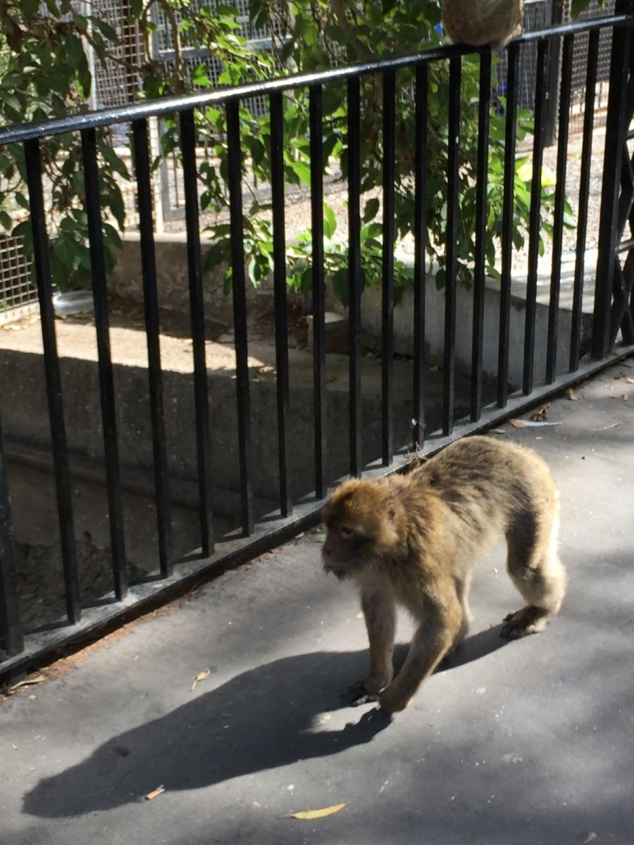 Monos-en-la-ciudad-21
