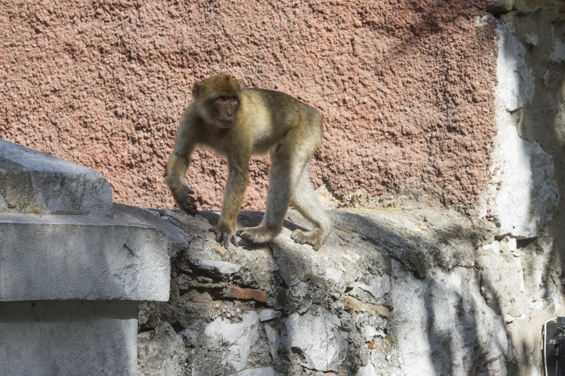Monos-en-la-ciudad-23