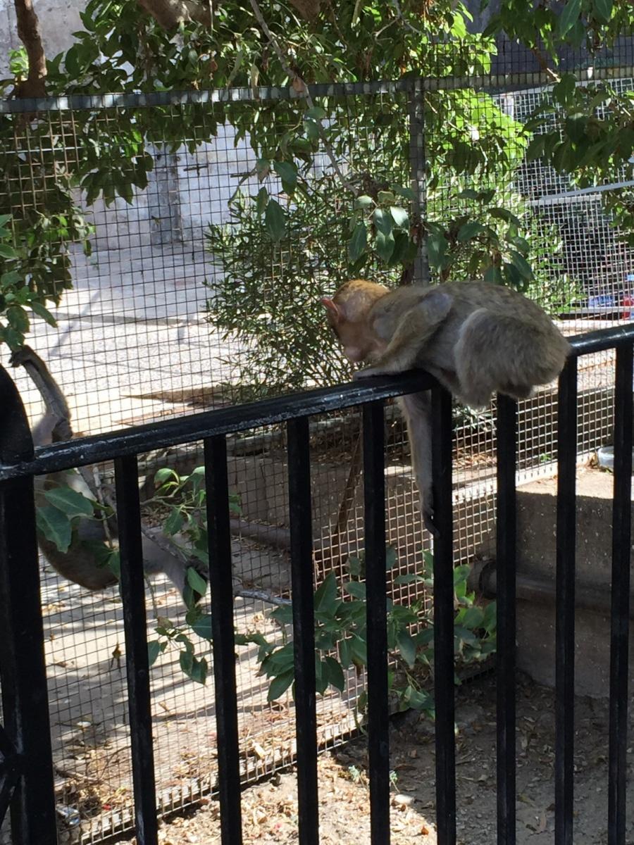 Monos-en-la-ciudad-25