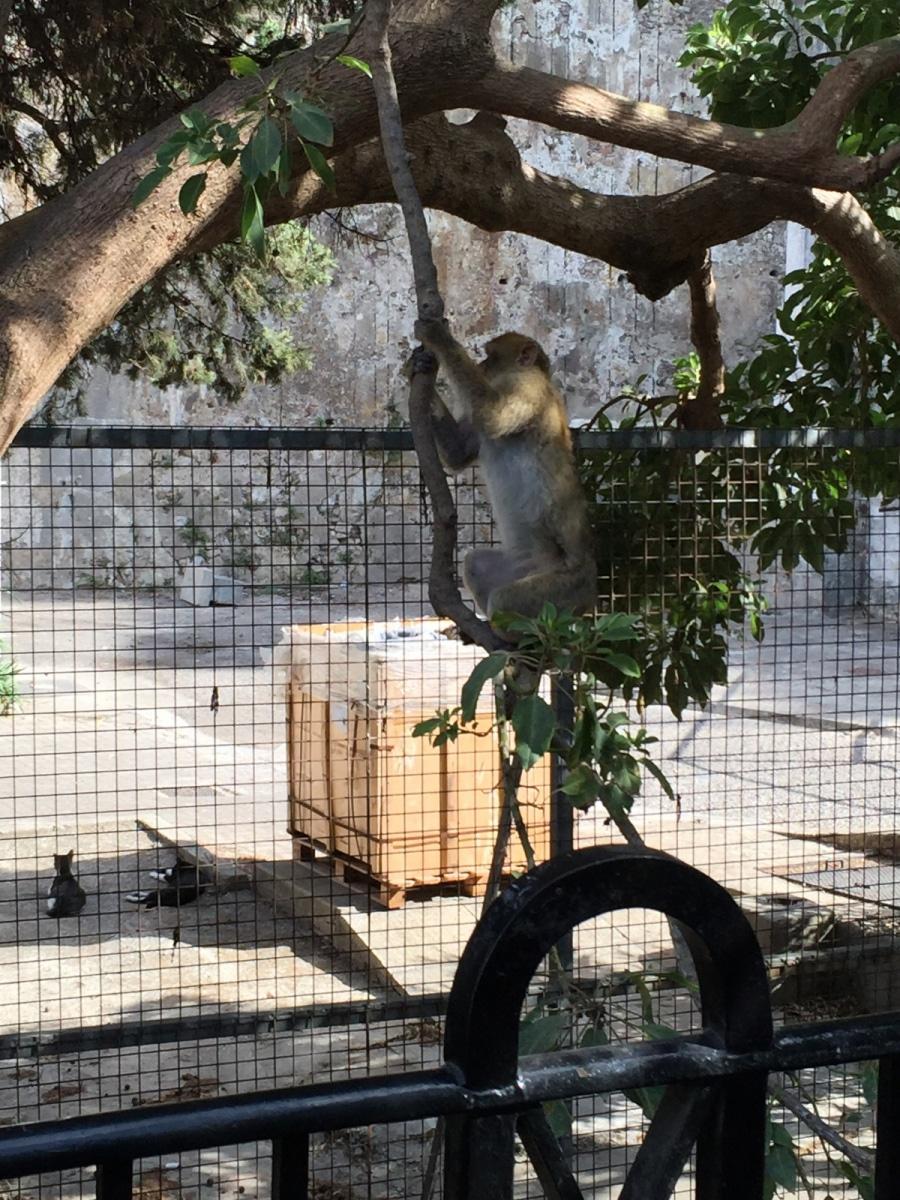 Monos-en-la-ciudad-26