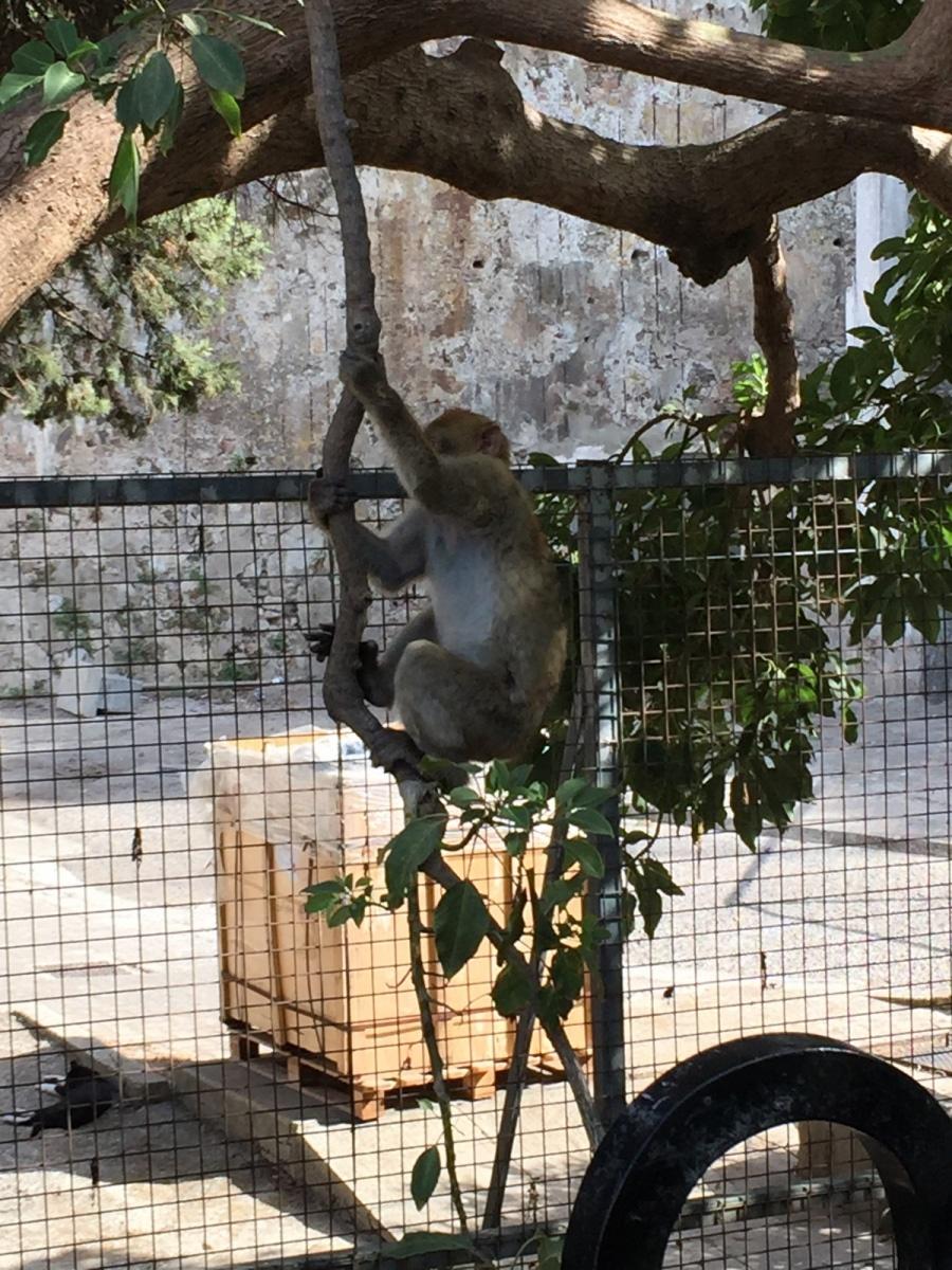 Monos-en-la-ciudad-27