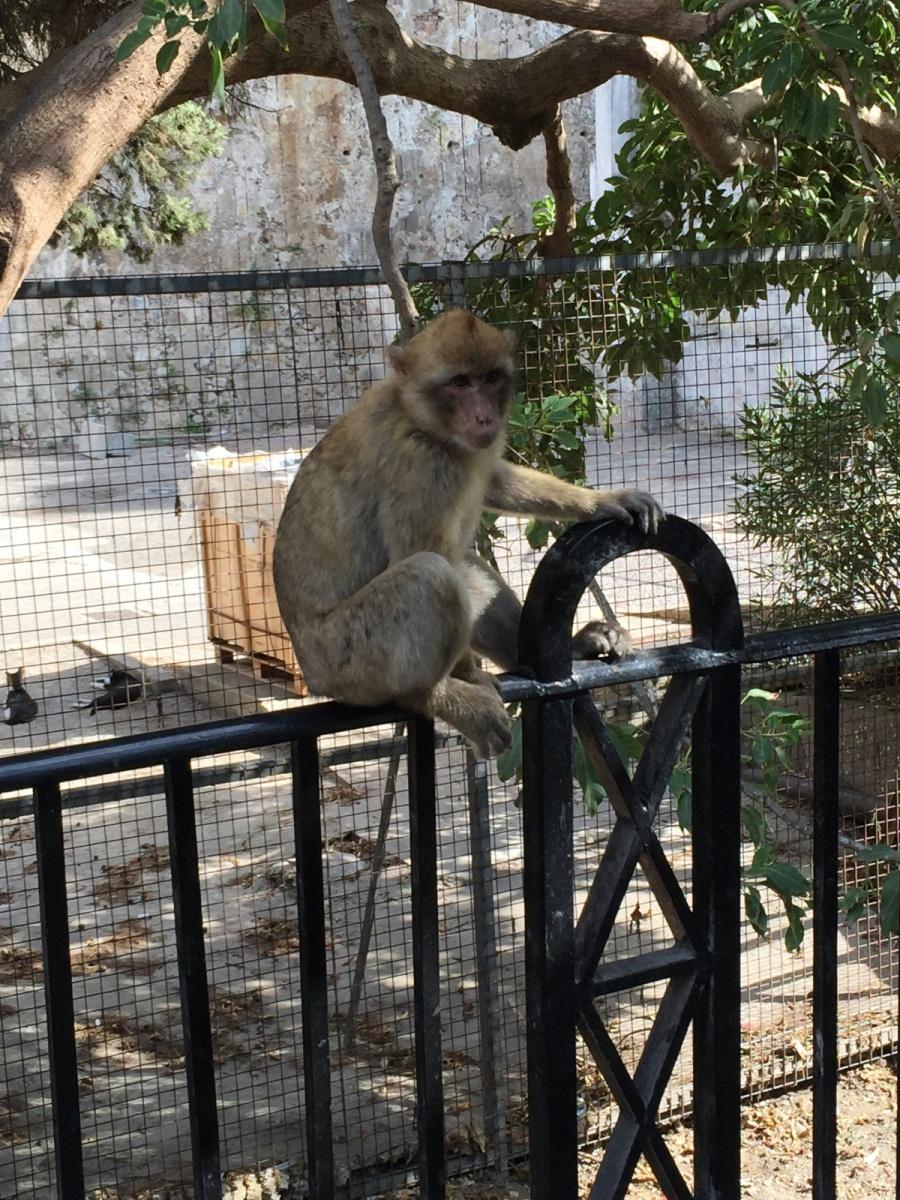 Monos-en-la-ciudad-29