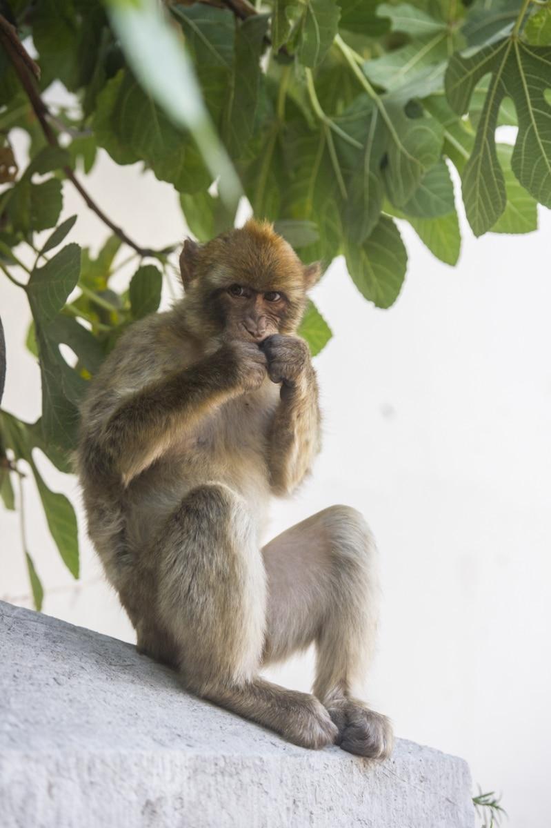 Monos-en-la-ciudad-30