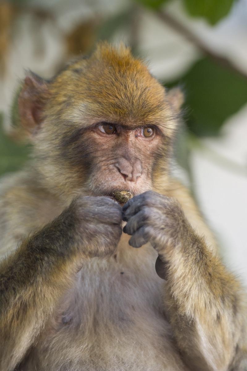 Monos-en-la-ciudad-31