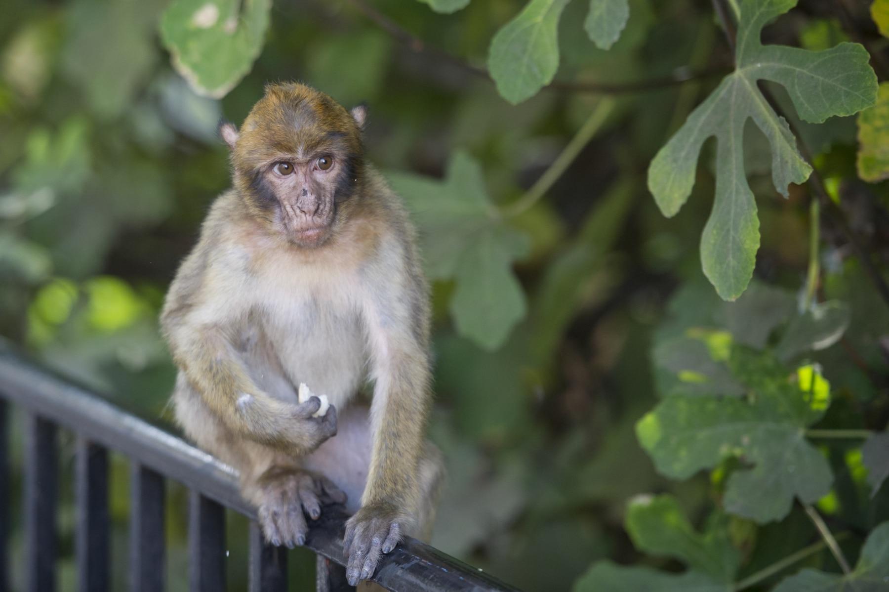 Monos-en-la-ciudad-32
