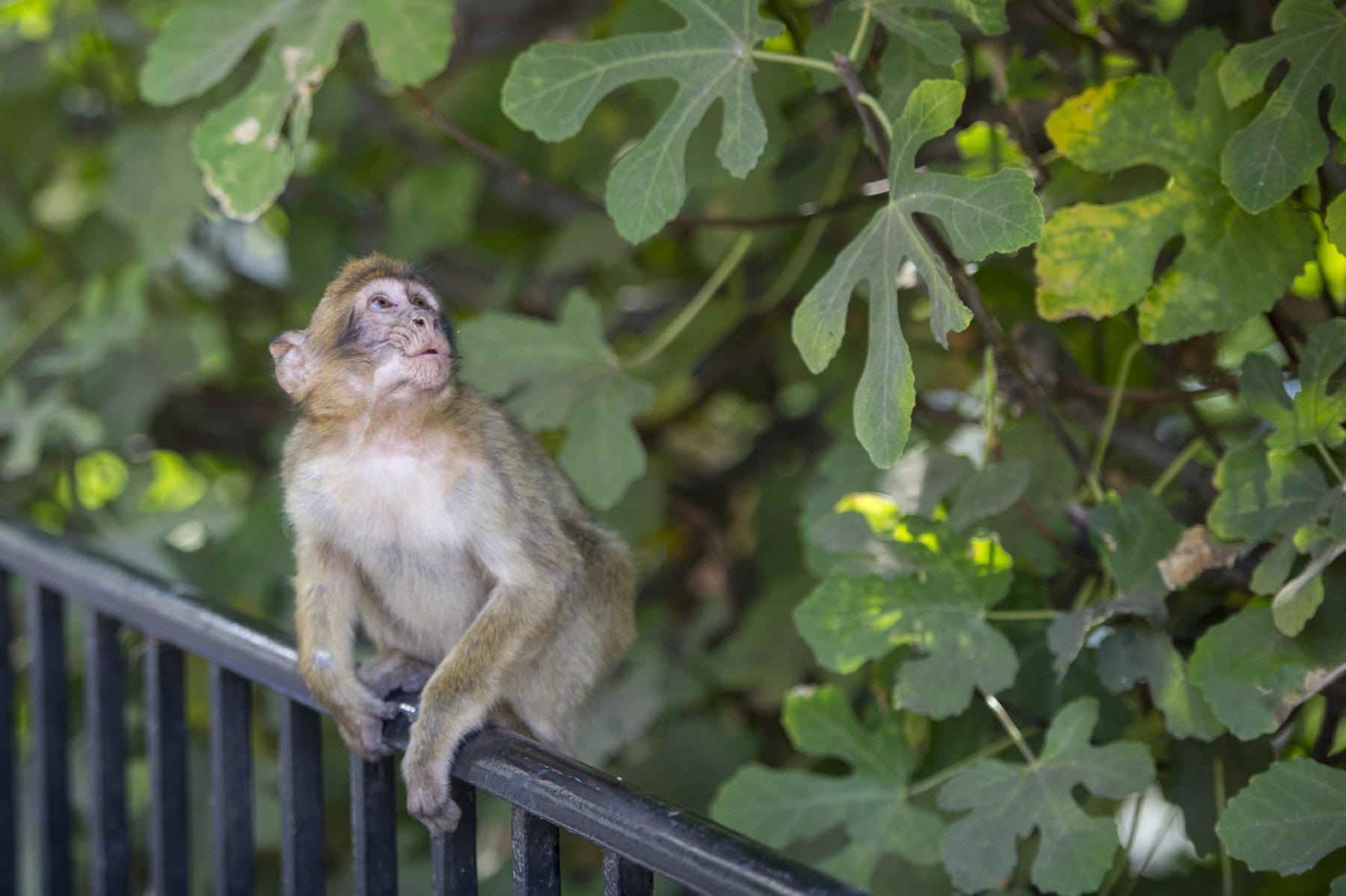 Monos-en-la-ciudad-34