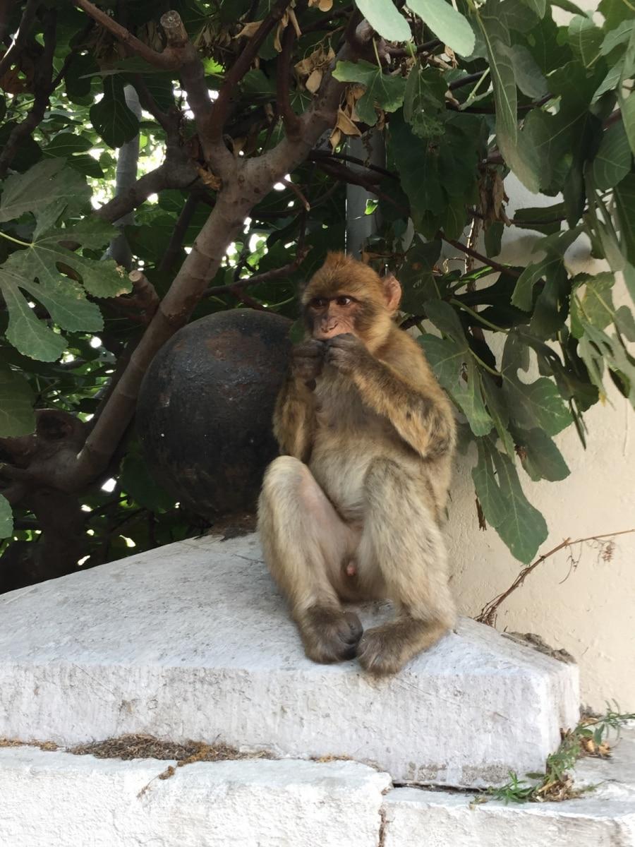 Monos-en-la-ciudad-35