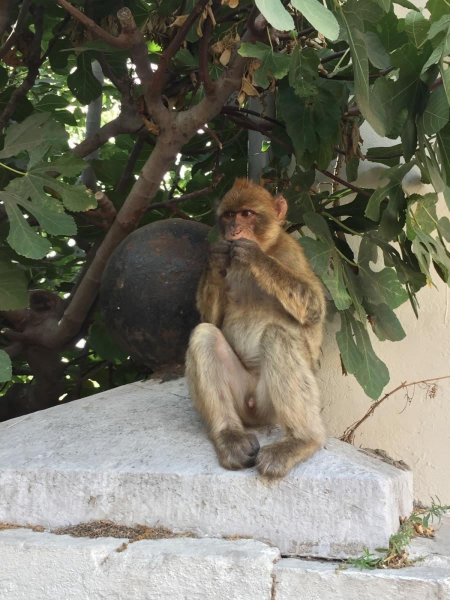 Monos-en-la-ciudad-36
