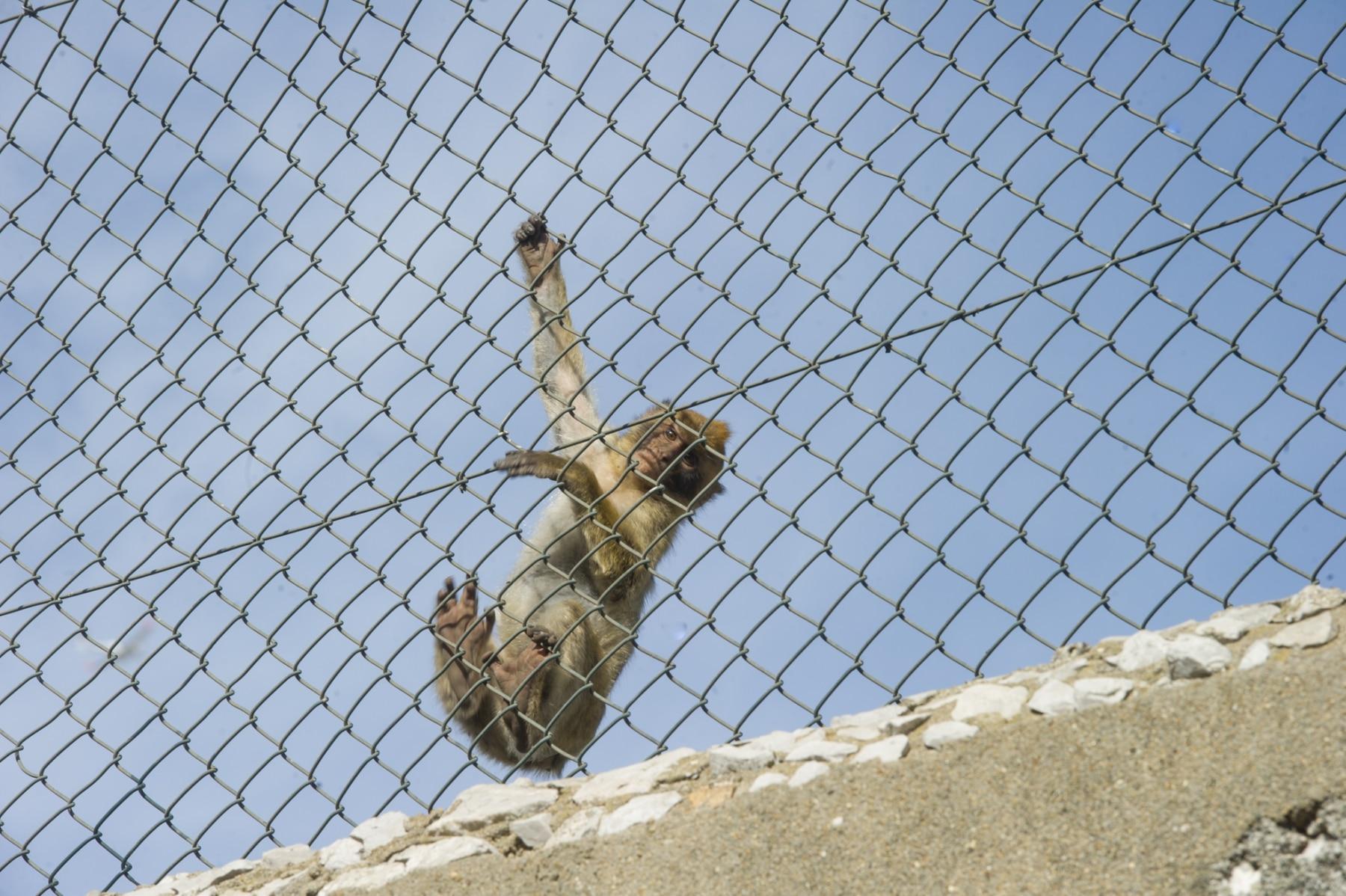 Monos-en-la-ciudad-8