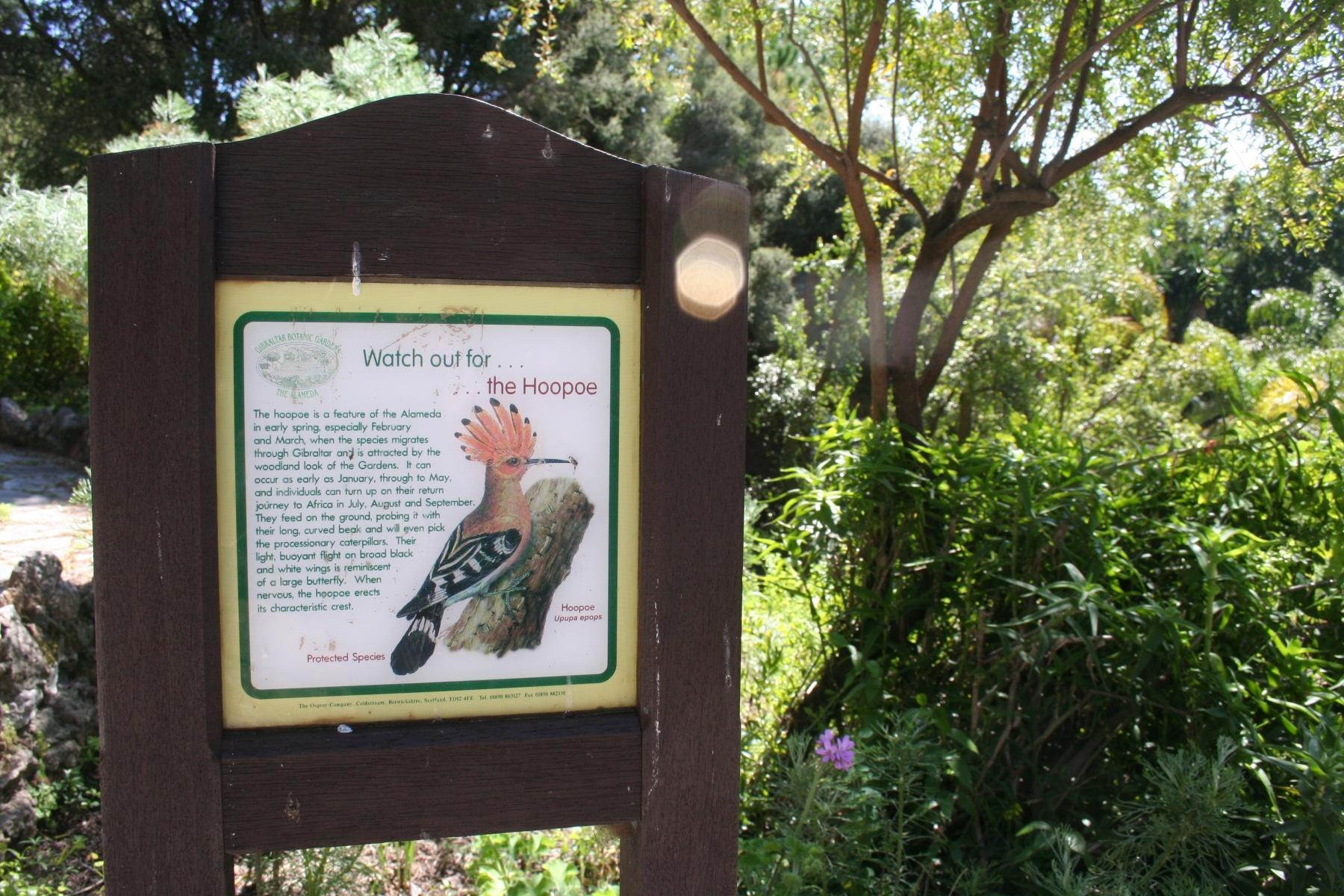 15-de-abril-2016-jardines-de-la-alameda-de-gibraltar-48_26167986260_o