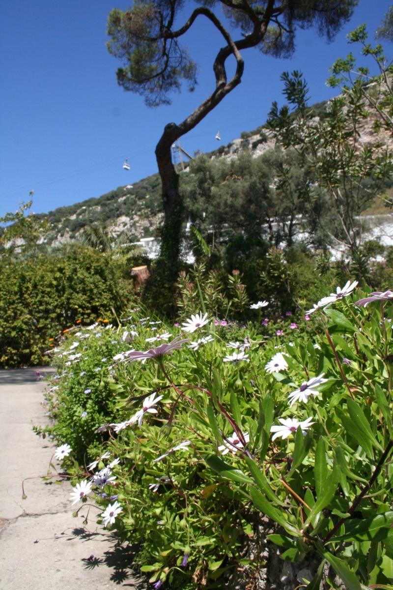 15-de-abril-2016-jardines-de-la-alameda-de-gibraltar-51_26374637391_o