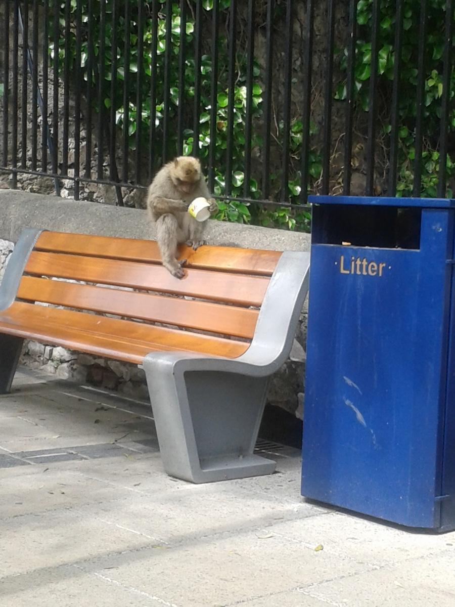monos-en-la-ciudad-03_9222311515_o