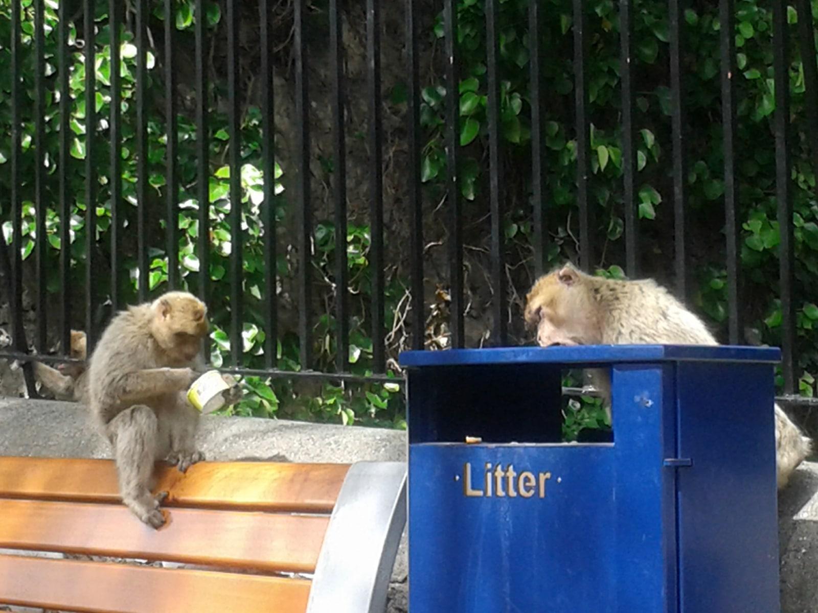 monos-en-la-ciudad-04_9222308173_o