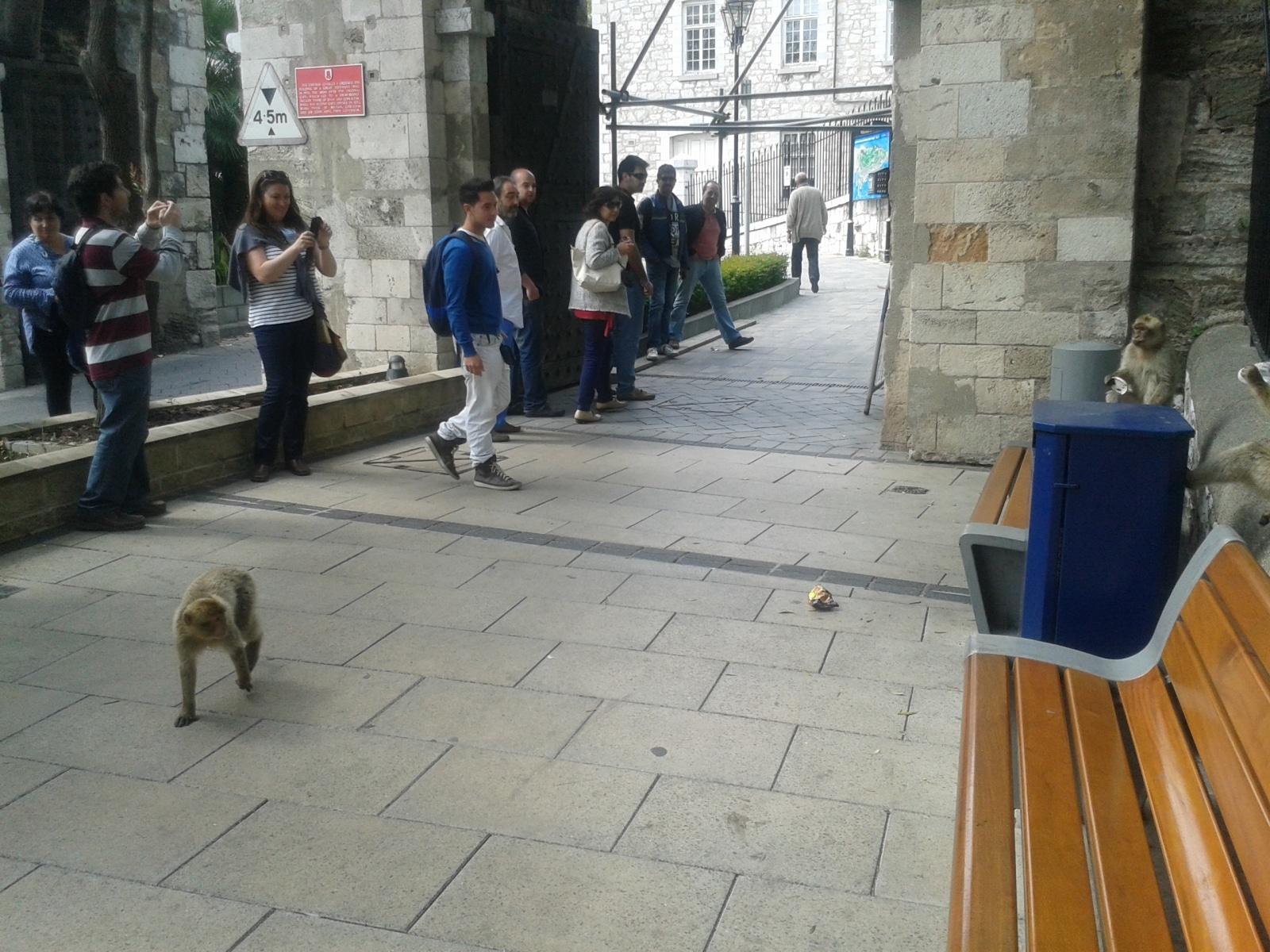 monos-en-la-ciudad-08_9225086836_o