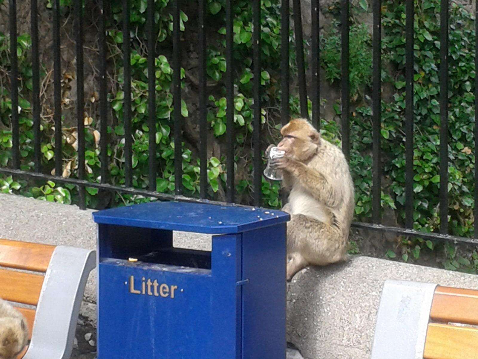 monos-en-la-ciudad-10_9225079886_o
