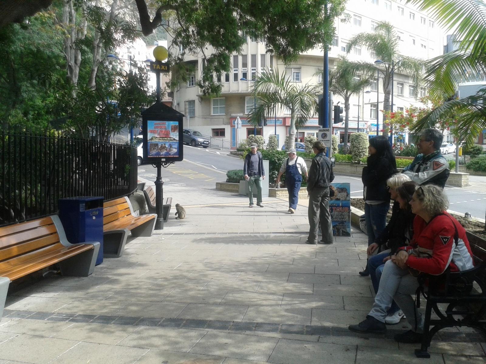 monos-en-la-ciudad-11_9222303613_o