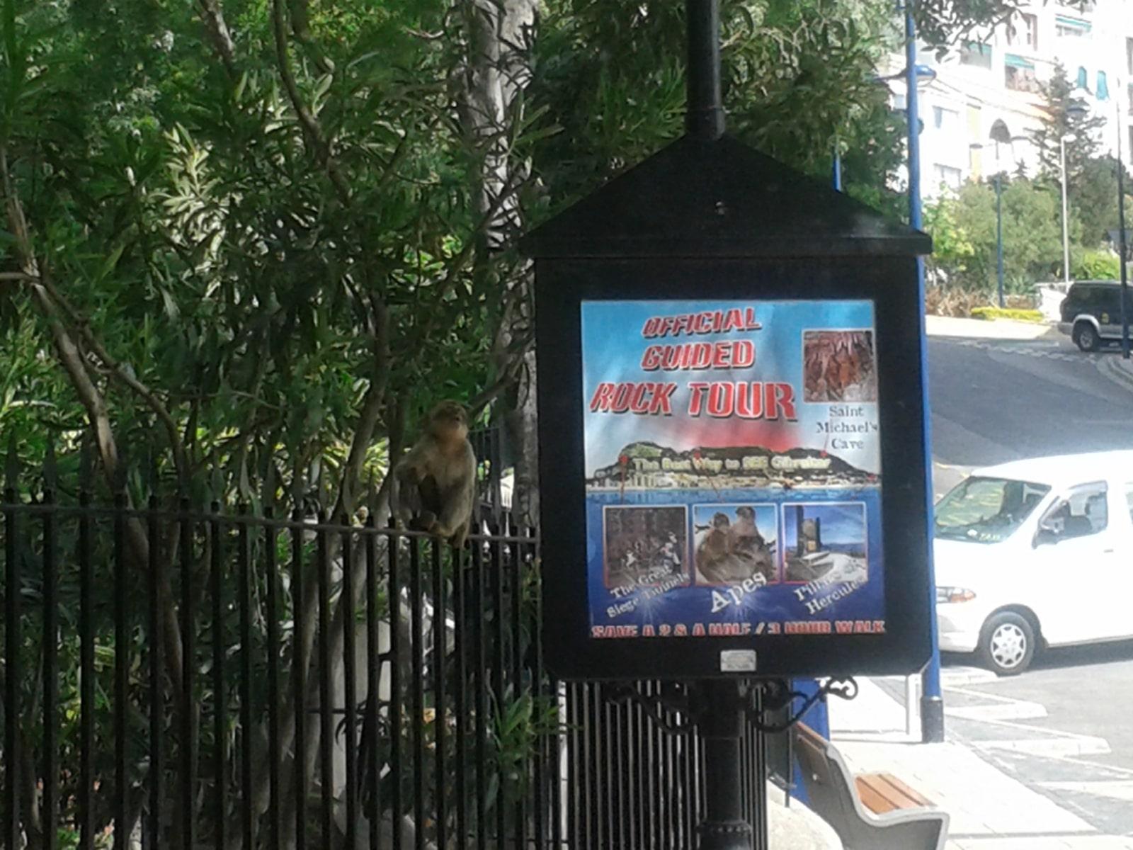 monos-en-la-ciudad-20_9222307311_o