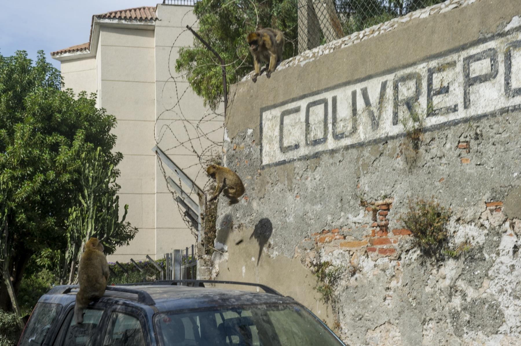 turismo-en-gibraltar-092015-676_22730312622_o