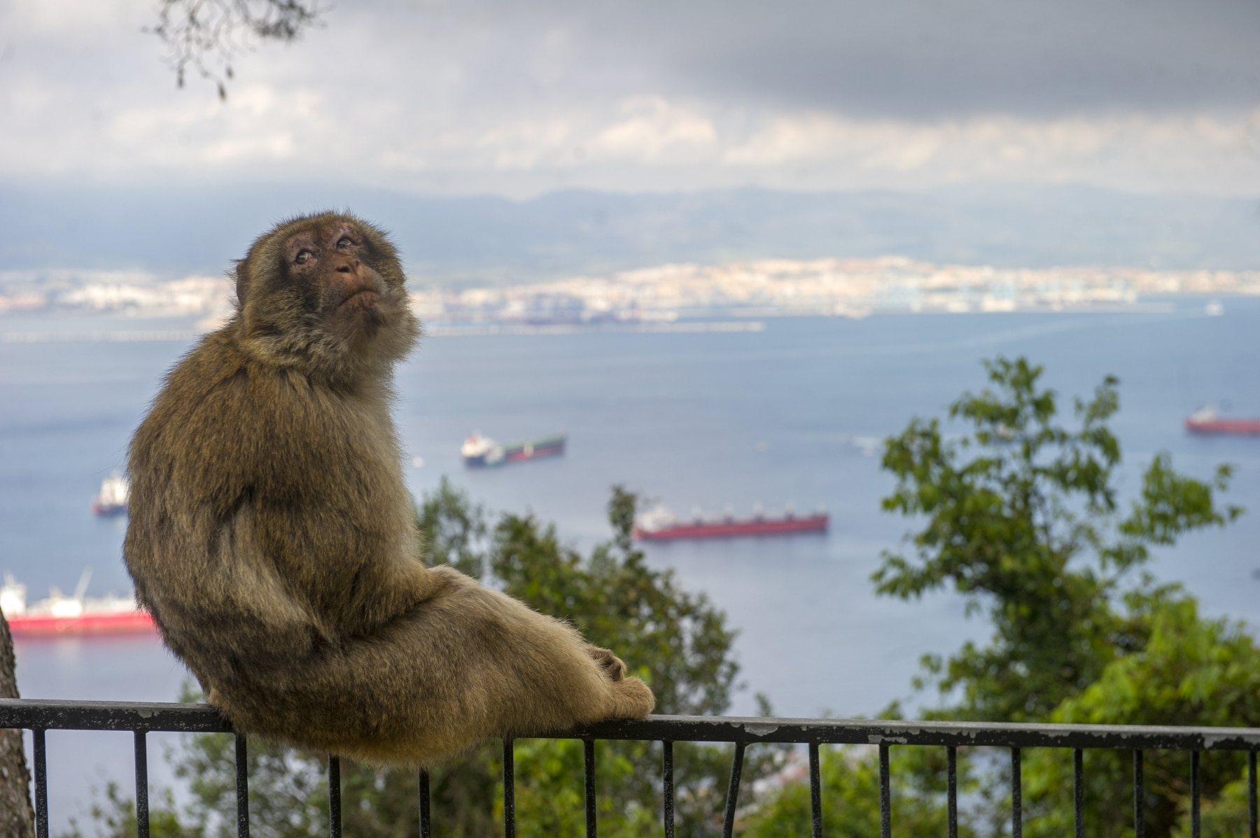 monos-zona-alta-del-pen-con-turistas-01_9225070430_o