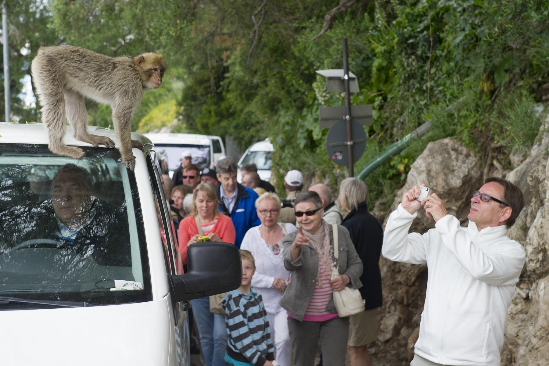 monos-zona-alta-del-pen-con-turistas-06_9222301105_o