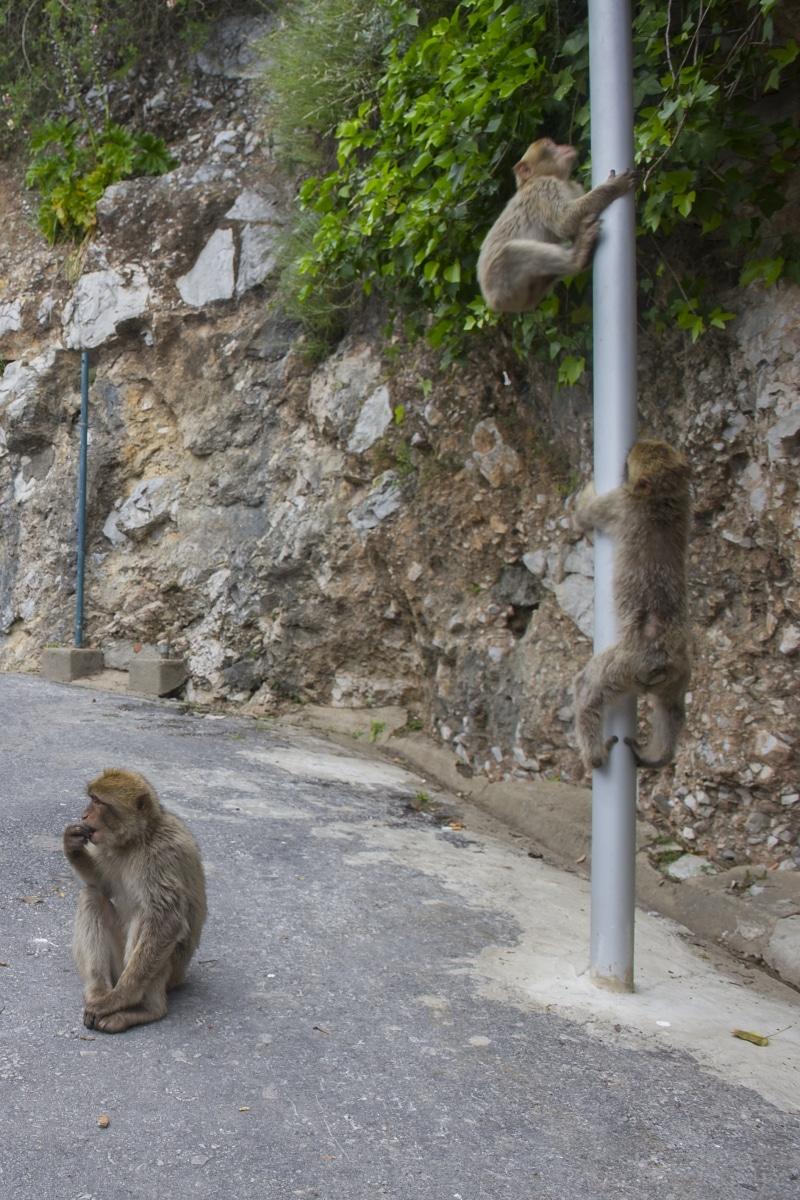 monos-zona-alta-del-pen-con-turistas-09_9222299039_o