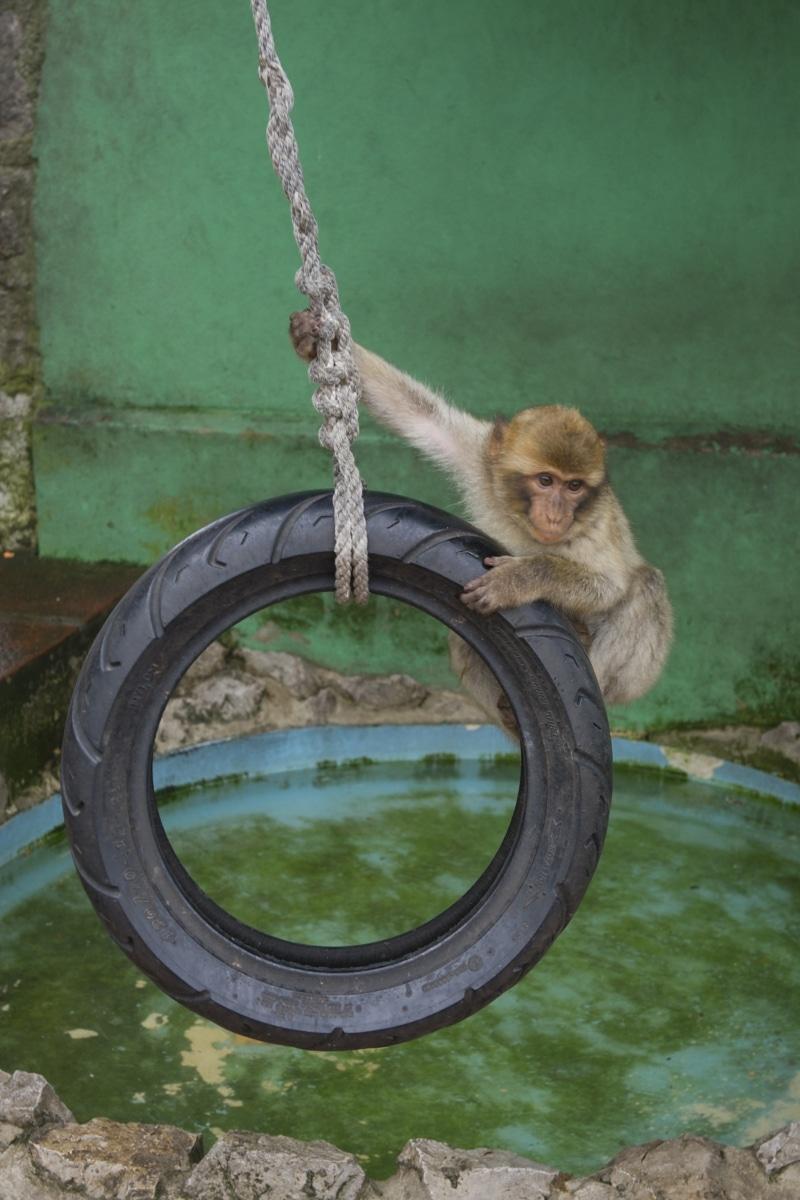 monos-zona-alta-del-pen-con-turistas-12_9225073978_o