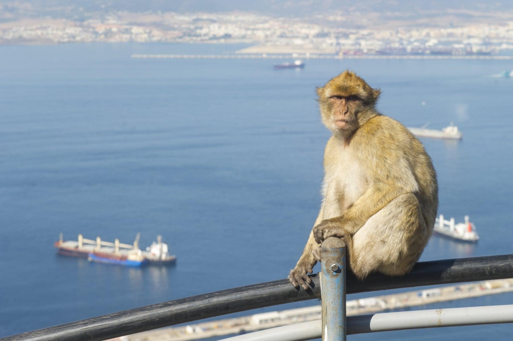 turismo-en-gibraltar-092015-221_22124236103_o
