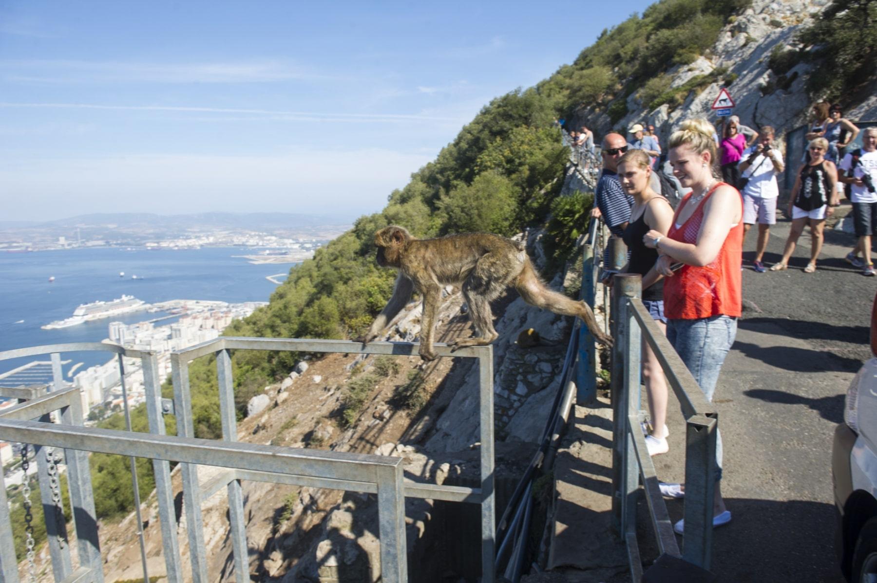 turismo-en-gibraltar-092015-230_22745340035_o