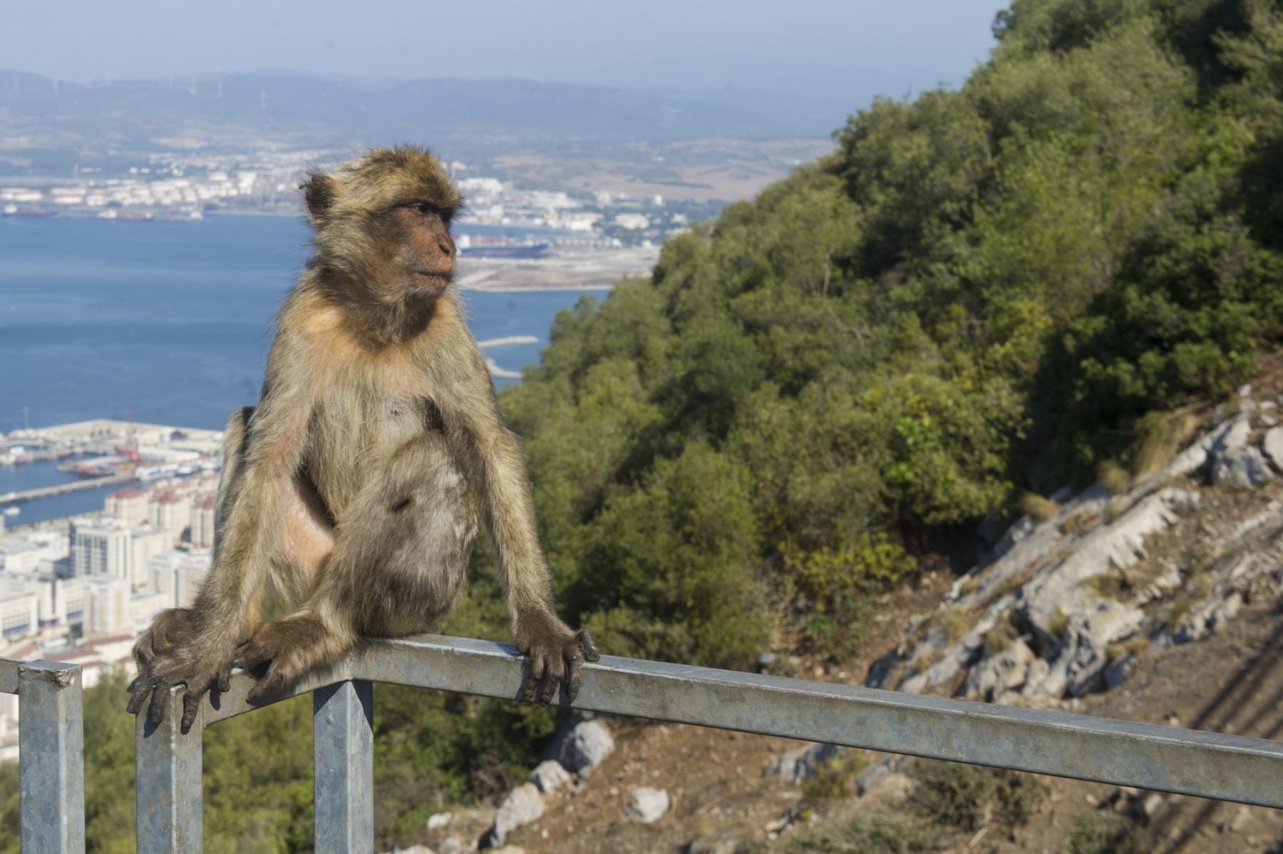 turismo-en-gibraltar-092015-233_22731785792_o
