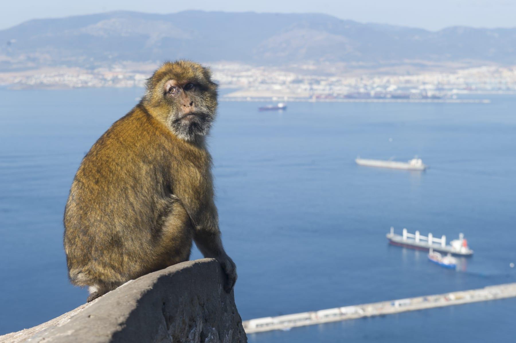 turismo-en-gibraltar-092015-237_22745326245_o