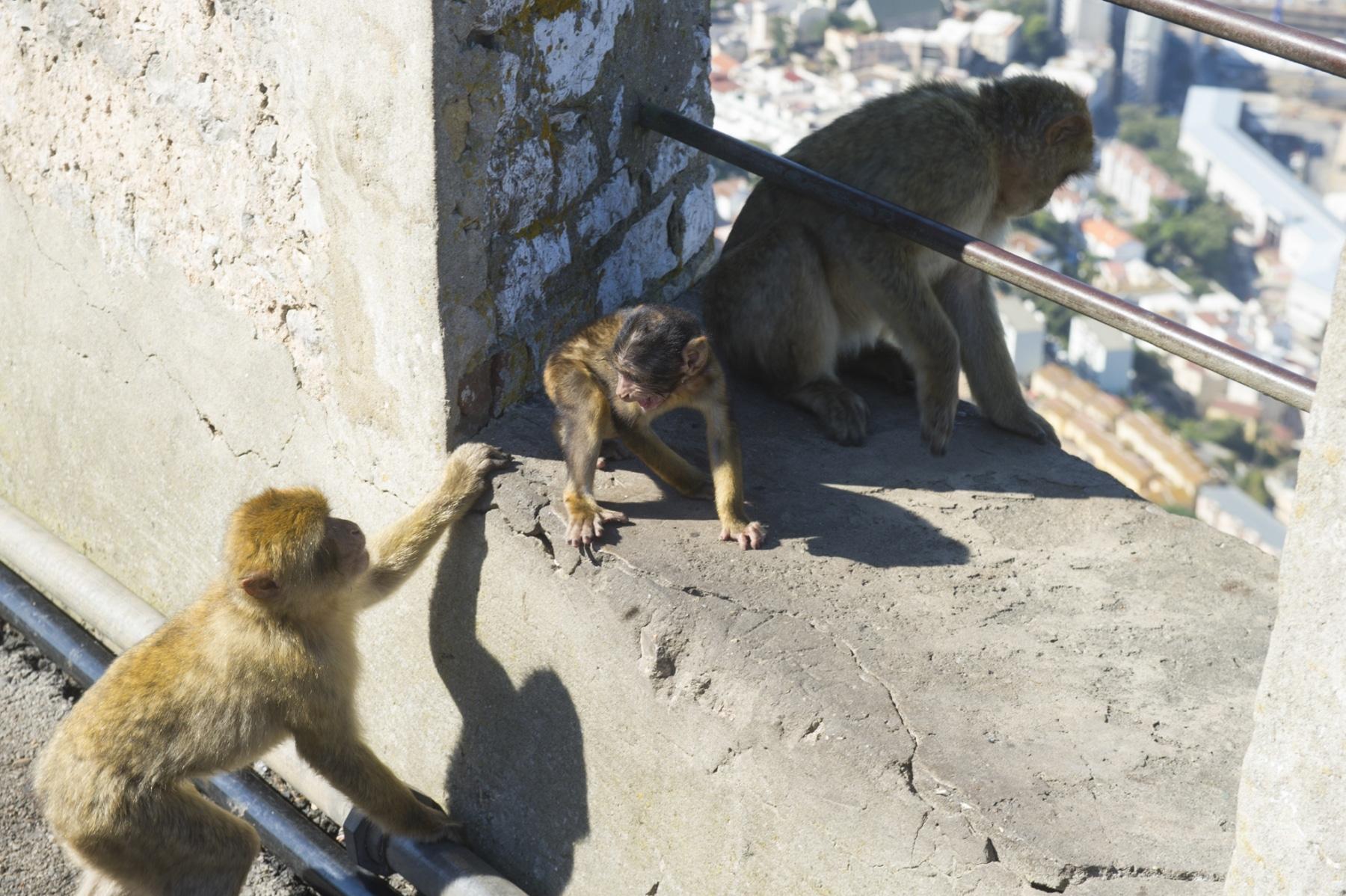 turismo-en-gibraltar-092015-258_22124185133_o