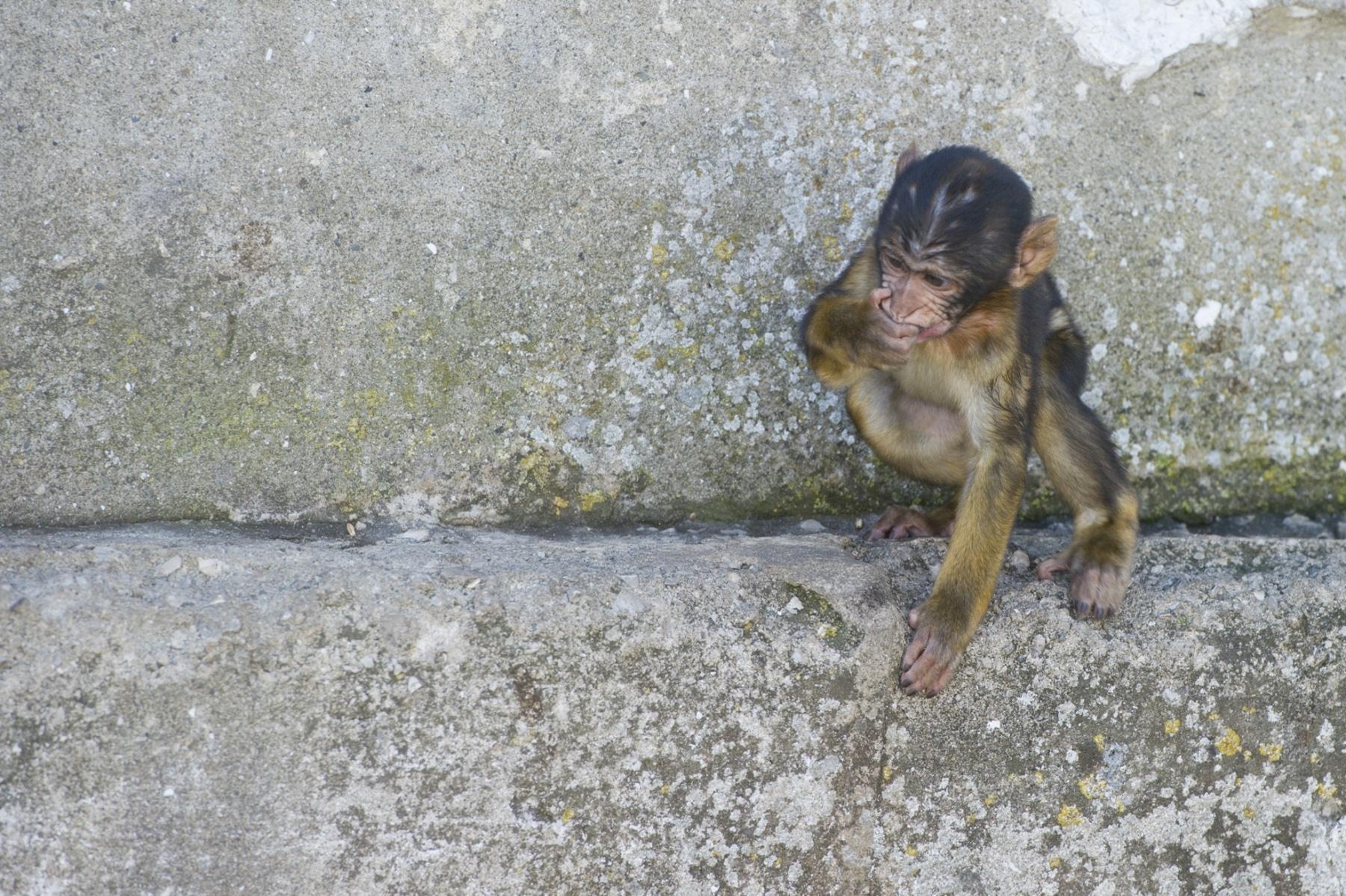 turismo-en-gibraltar-092015-310_22719197946_o