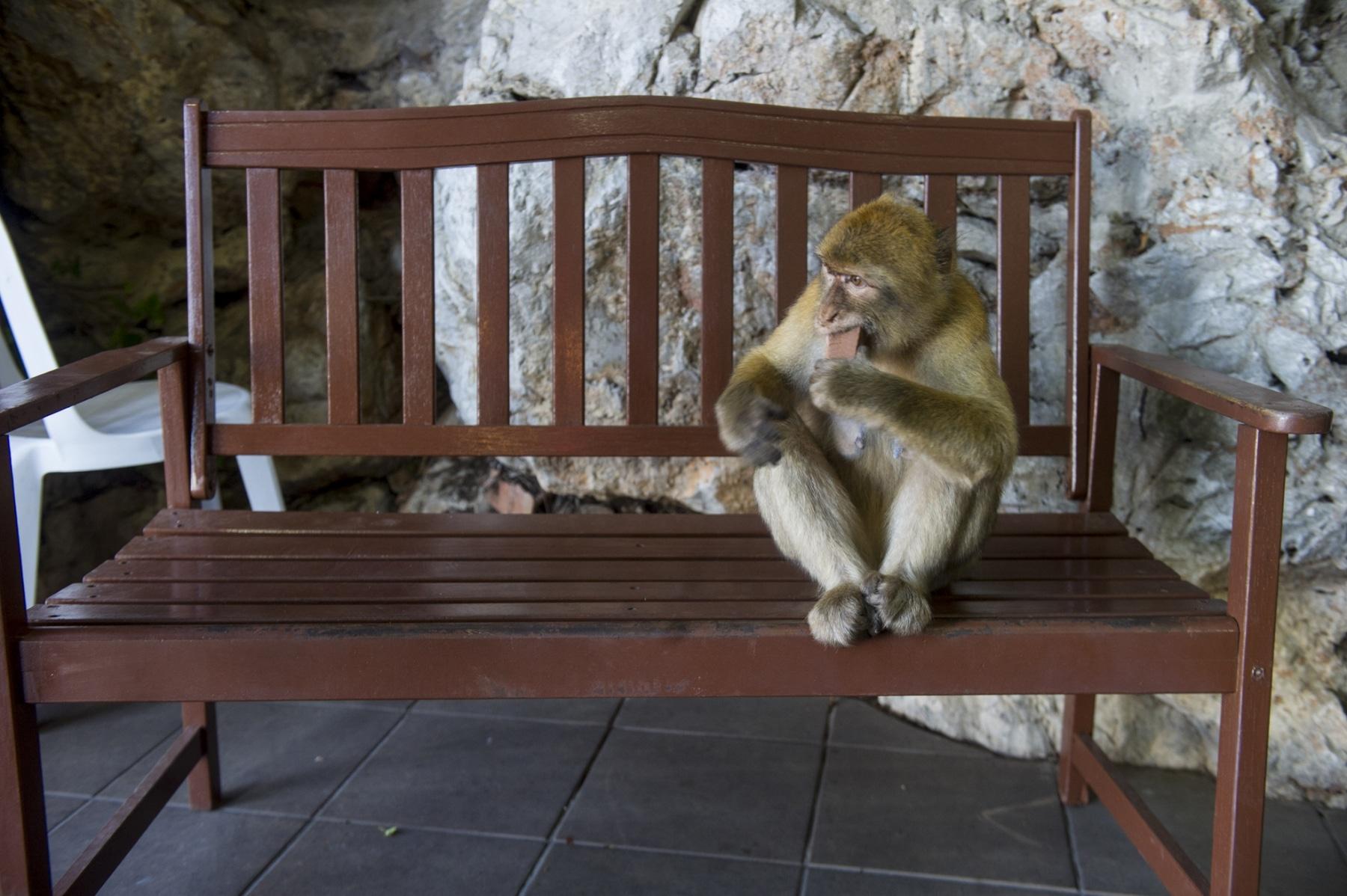turismo-en-gibraltar-092015-479_22123930803_o